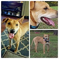 Adopt A Pet :: Coweta Charlie - Broken Arrow, OK