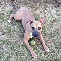 Adopt A Pet :: Diamond-Georgia - Fulton, MO