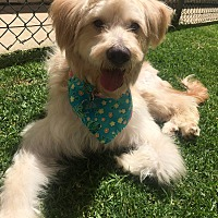 Adopt A Pet :: Princess Coconut - Los Angeles, CA