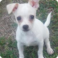 Adopt A Pet :: Dobi - Orlando, FL