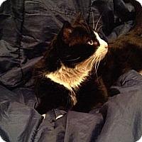 Adopt A Pet :: Roger - Brooklyn, NY