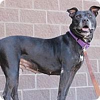 Adopt A Pet :: Vally - Fountain, CO
