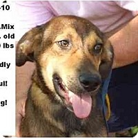 Adopt A Pet :: # 484-10 - ADOPTED! - Zanesville, OH
