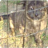 Adopt A Pet :: JUBA - Fowler, CA