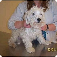 Adopt A Pet :: BUFFY - Rossford, OH