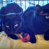 Adopt A Pet :: Miss Bliss-edob 4/24/12 - Scottsdale, AZ