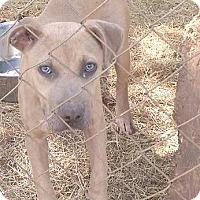 Adopt A Pet :: Bubbles - Moulton, AL