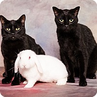 Adopt A Pet :: Benjamin Franklin - Albemarle, NC