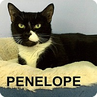 Adopt A Pet :: Penelope - Medway, MA