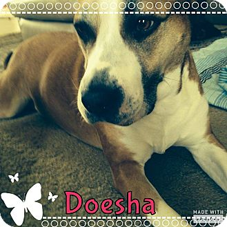 Boxer/Pit Bull Terrier Mix Dog for adoption in Rowlett, Texas - Doesha