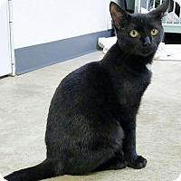 Adopt A Pet :: Nelson - Manteo, NC