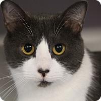 Adopt A Pet :: Mindi - Sarasota, FL