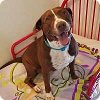 Adopt A Pet :: Marley - Houston, TX
