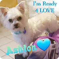 Adopt A Pet :: Ashton - Wellington, FL