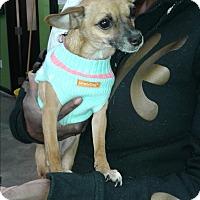 Adopt A Pet :: Lola - Barnwell, SC