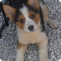 Adopt A Pet :: Maddie Venice Petco Sat - Orlando, FL