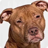 Adopt A Pet :: CASSUS - Palmer, AK