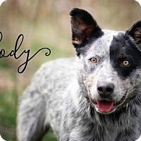Adopt A Pet :: Cody - Joliet, IL