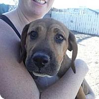 Adopt A Pet :: Calypso - Atascadero, CA