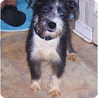 Adopt A Pet :: Cosmo - Orange Park, FL