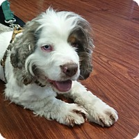 Adopt A Pet :: Gomer - Greeley, CO