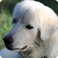 Adopt A Pet :: Lovable Sam - Kyle, TX