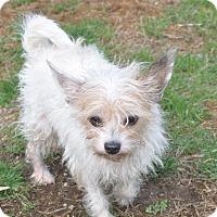 Adopt A Pet :: Toby - Tumwater, WA