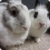Adopt A Pet :: Zoey & Joey - Newport, DE