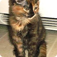 Adopt A Pet :: Janie - Davis, CA