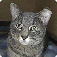 Adopt A Pet :: Dillon Frances - Chicago, IL
