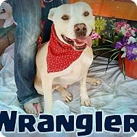 Adopt A Pet :: Wrangler - Odessa, TX