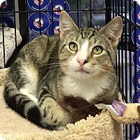 Adopt A Pet :: Nickels - Horsham, PA