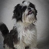 Adopt A Pet :: Bobby James - Davie, FL