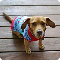 Adopt A Pet :: Diego - Huntsville, AL