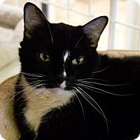 Adopt A Pet :: BABY - Houston, TX