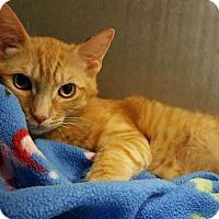 Adopt A Pet :: Tucson - Los Angeles, CA