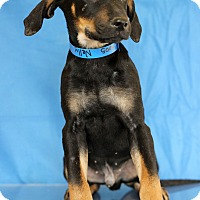 Adopt A Pet :: Nelly - Waldorf, MD