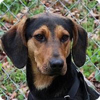 Adopt A Pet :: Copper - Harrisonburg, VA