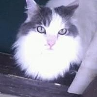 Adopt A Pet :: Augie - Calimesa, CA