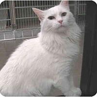 Adopt A Pet :: Sara - Mesa, AZ