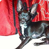 Adopt A Pet :: Tuxedo - Poulsob, WA