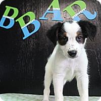 Adopt A Pet :: Stone - Bedminster, NJ