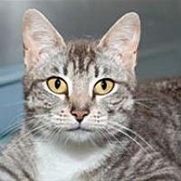 Adopt A Pet :: Cammi - Mountain Home, AR