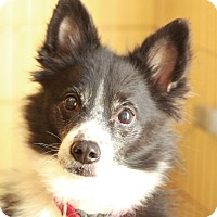 Adopt A Pet :: Sprout - Romeoville, IL