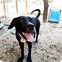 Adopt A Pet :: Medina - Danbury, CT