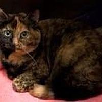 Adopt A Pet :: Lulabelle - mishawaka, IN