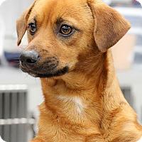 Adopt A Pet :: Jack - Seattle, WA