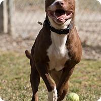 Adopt A Pet :: Thunder - Howell, MI