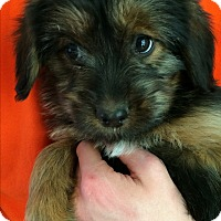 Adopt A Pet :: Felix - SOUTHINGTON, CT
