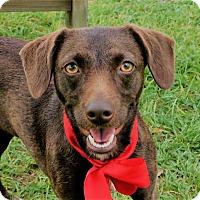 Adopt A Pet :: Daisy - Friendswood, TX